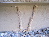 Termite Treatment for Subterranian Termites
